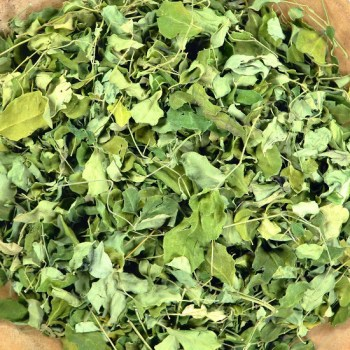 moringa-tea-herb